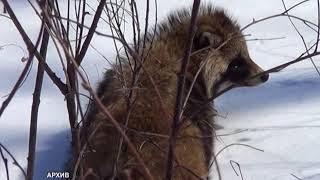 Количество диких животных урегулируют в приказном порядке (РИА Биробиджан)