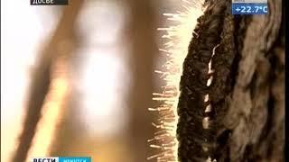 Ягоды и грибы в Черемховском и Заларинском районах Иркутской области временно нельзя употреблять в п