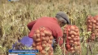 Аграрии Калининградской области подвели итоги этого года