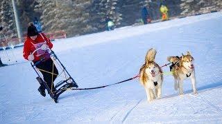«Лыжню России» пробежали дети и собаки