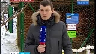 В Иркутской области просыпаются барсуки  Когда придёт весна?