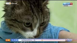 Пензенцы отмечают День кошек