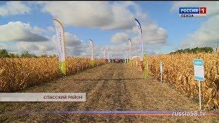 Пензенские агрокомпании провели мастер-классы по выращиванию кукурузы и подсолнечника
