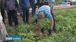 Смоленщина поставляет лучшие сорта картофеля в 36 регионов страны
