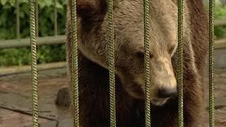 Медведица Маша делает прогноз на матч Россия – Египет