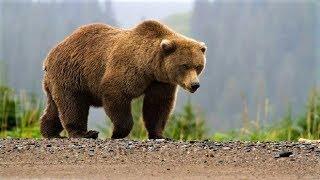 В Октябрьском районе застрелили опасного медведя