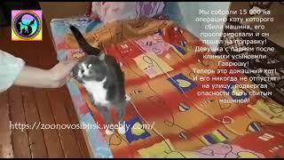 Кот благодарит всех кто его спас после ДТП Чудесное спасение Гаврюши
