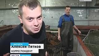 Рыбоводы Ангарска успешно разводят пелядь