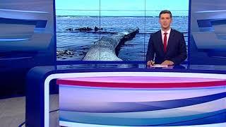 В Ярославской области утонули два рыбака