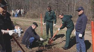 UTV. В уфимском парке им  Георгия Рутто чиновники высадили саженцы сосны