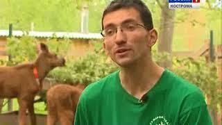 Юные лосята с Сумароковской фермы впервые вышли в большой лес