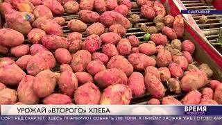 Уборка картофеля в Коми началась