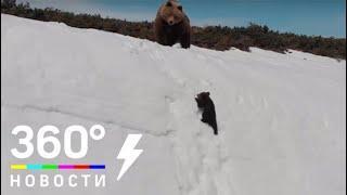 Видео с упрямым медвежонком в Магаданской области возмутило пользователей Сети