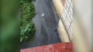 Крысы атаковали дом в Дзержинском районе Ярославля