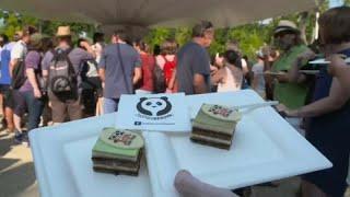 День рождения у панды