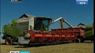 Черемховский и Куйтунский районы лидируют в уборке зерновых