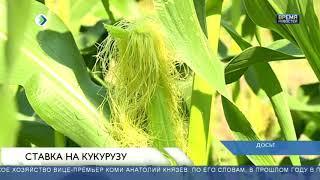 Ставка на кукурузу