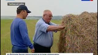 Заготовка сена в амурских хозяйствах идет с большими трудностями