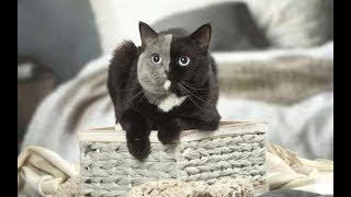 Смешное про кошек Видео приколы про кошек и котов 2018 #18 (Котики и кошечки Без монтажа)