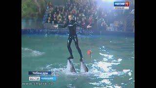 Более пятисот  юных чебоксарцев  побывали на благотворительном  представлении в передвижном дельфина