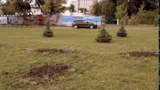 Из сквера в Ярославле похитили около 30 яблонь