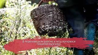 62-летний пенсионер пропал в лесу под Череповцом