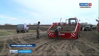 Хозяйства Новосибирской области начали сажать картофель