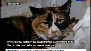Благовещенская пенсионерка ищет новых хозяев для своих кошек
