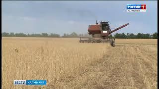 В Калмыкии завершается уборка зерновых