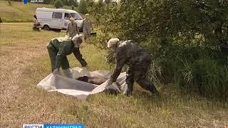 В Калининградской области зарегистрировали новые вспышки африканской чумы свиней