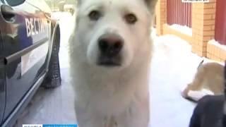 Жителей Канска терроризируют бродячие псы