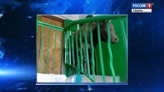 Корова поселилась в подъезде многоквартирного дома в центре Улан-Удэ