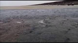 На Камчатке массовый ход лосося сняли на видео
