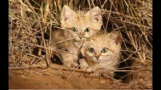 Забавное видео с кошками и котами Смешные кошки лучшие приколы #19 (Улетно и весело)