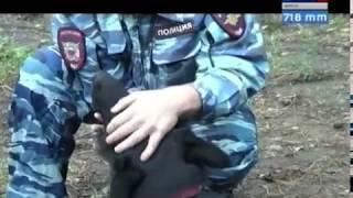 Овчарка Такимо раскрыла кражу в Иркутске