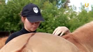 Глазами животных #312. Обучающий семинар для волонтеров проекта «За здоровьем к лошадке»