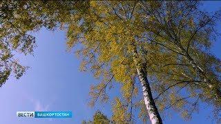 В Башкирии синоптики обещают похолодание в конце недели