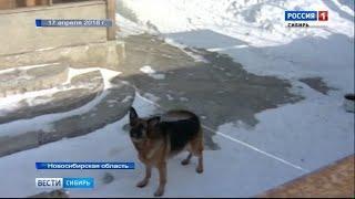 Собака напала на полуторагодовалого ребенка в Красноярском крае