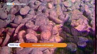 1988 год. Посадка картофеля
