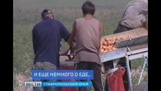 """""""Вести Ставропольский край. Экономика"""" 13.11.2018"""