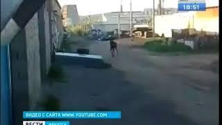 «Даже лось бегает по утрам, а ты?».  Таёжного гостя увидели в пригороде Иркутска