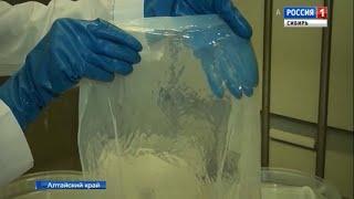 Уникальное вещество с полезными бактериями создали из целлюлозы алтайские ученые