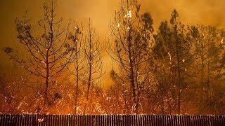 «Никто не думал, что пожар сожжет весь город». Блогер из Калифорнии о массовых возгораниях в лесах