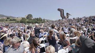 Пеликаны-выпускники