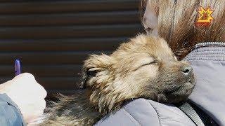 Центр передержки безнадзорных животных провел акцию про пристройству питомцев