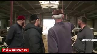 Рамзан Кадыров: Чеченская Республика сделала большой шаг в развитии животноводства и птицеводства