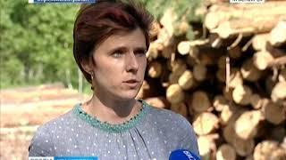 В Берёзовском районе в промышленных объёмах вырубают сосновый лес