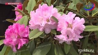 В Махачкале стартовал один из самых красивых праздников – фестиваль цветов