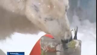 Викторины и призы: в ростовском зоопарке отметят День рождения медведицы Кометы