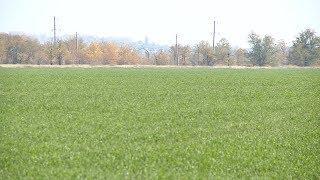 Волгоградские аграрии подводят итоги сельскохозяйственного года